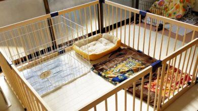 老犬ホーム あおいそら_24時間介護が必要な子のお部屋