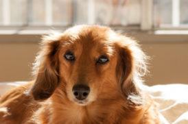 日向ぼっこをする老犬