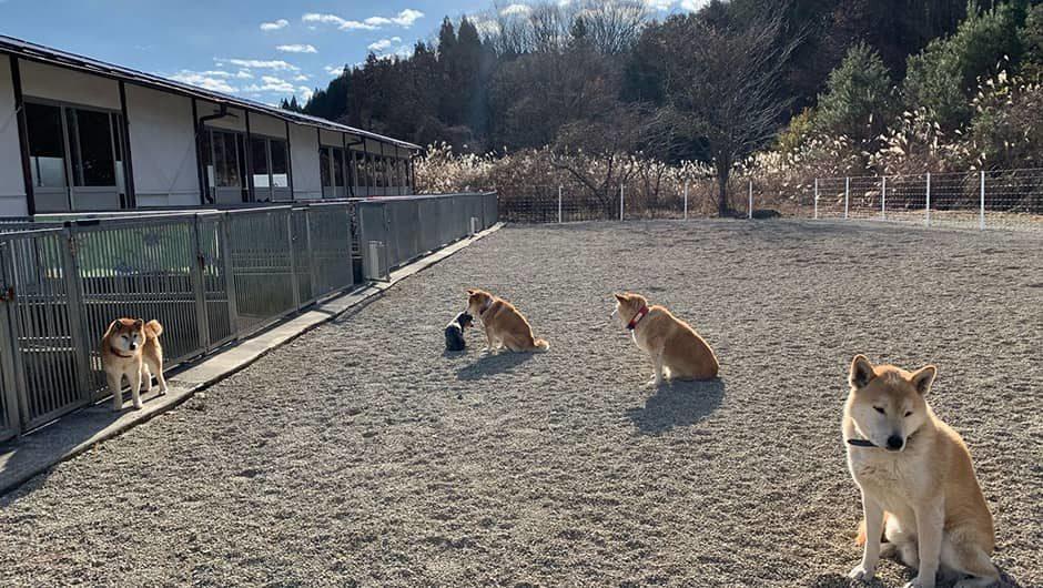 老犬ホームTOP_栃木犬舎_ドッグラン