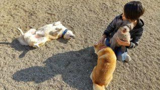 老犬ホームTOP_栃木犬舎_介護風景