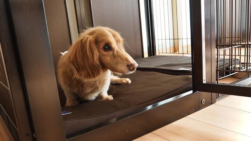 犬猫介護ホーム&ホテル Rocco_施設内観