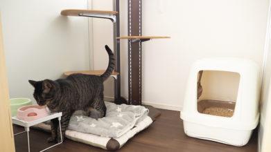 犬猫介護ホーム&ホテル Rocco_猫ちゃんのお部屋
