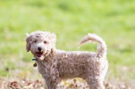 草原に立つ老犬