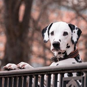 柵につかまる老犬