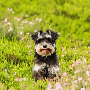 花畑にいる老犬