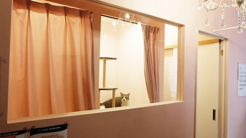 猫の診療室モモ_ネコちゃんの個室