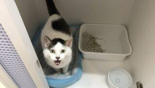 猫の診療室モモ_ネコちゃんのお部屋