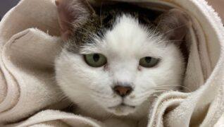 猫の診療室モモ_介護風景