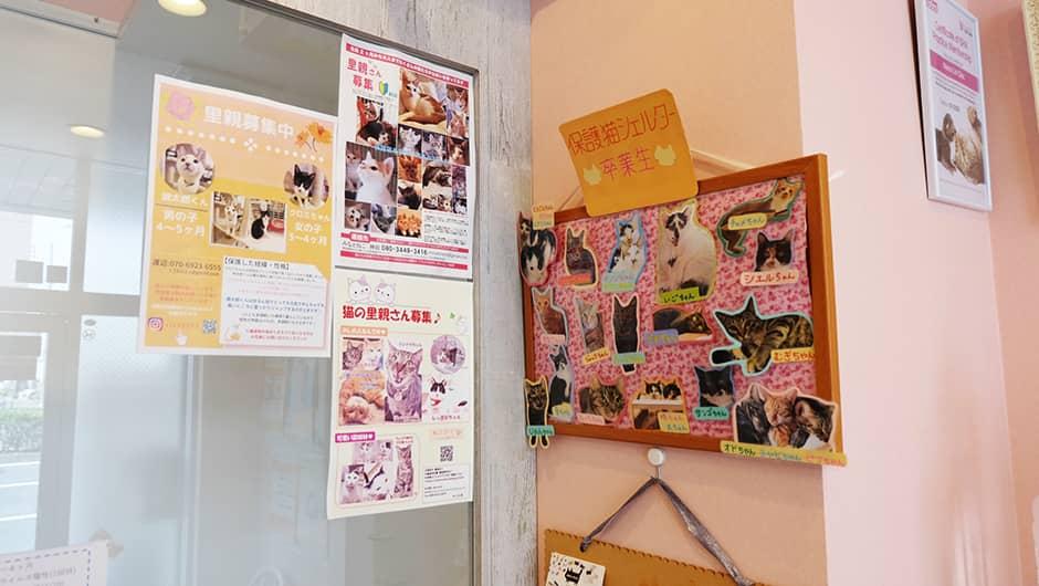猫の診療室モモ_保護猫たち