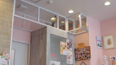 猫の診療室モモ_キャットウォーク
