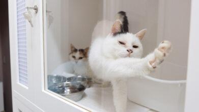 猫の診療室モモ_看板猫